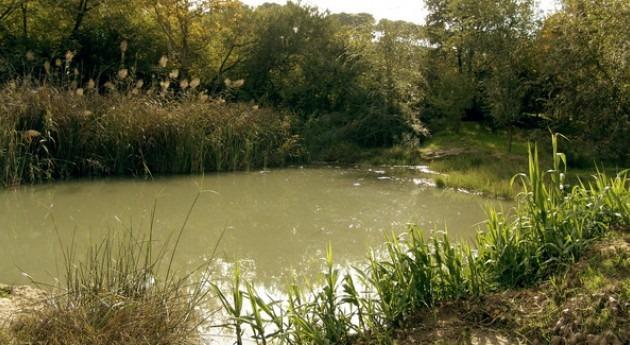 España sigue incumpliendo Directivas europeas materia aguas, Greenpeace