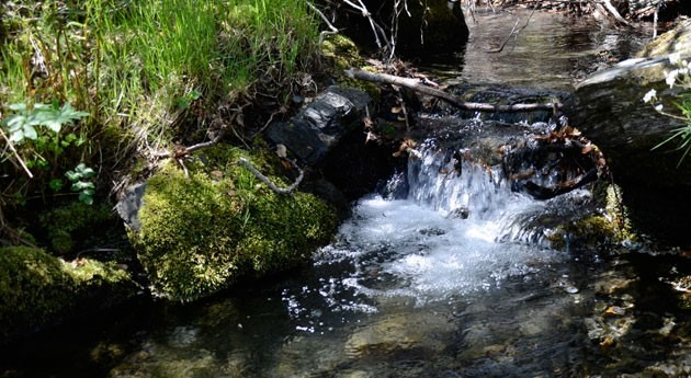 naturaleza conserva agua