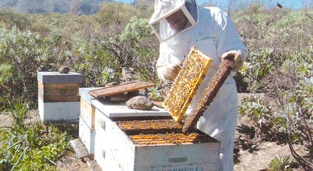 sequía reduce producción miel 40% respecto al año pasado