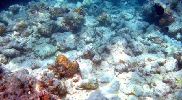 algas interrumpen cadena alimenticia arrecifes coral