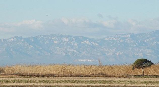 Deltamed y IRTA cooperarán desarrollo cultivo arroz delta Ebro