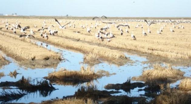 agricultura integrada es garantía conservar biodiversidad Doñana
