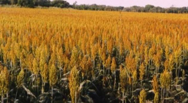 Salen información pública ayudas explotaciones agrarias paliar sequía