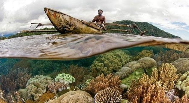 Biodiversidad como solución frente al cambio climático