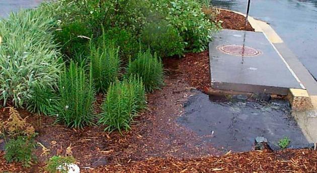 novedoso tanque biorremediación mitigará inundaciones campus UAEH