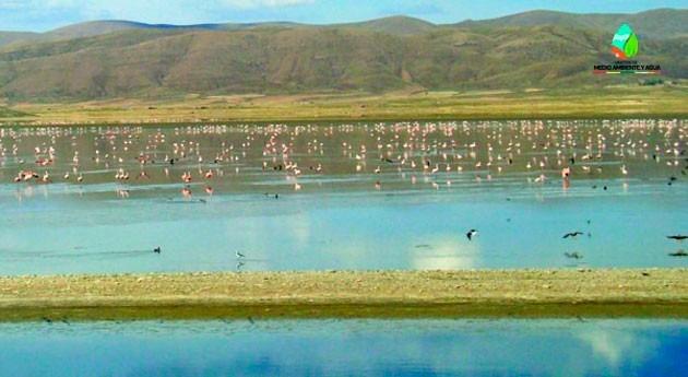 Bolivia busca articular acciones, conocimientos y saberes ancestrales conservar humedales