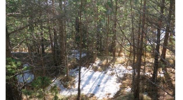 cambio climático hace aumentar vulnerabilidad sequía bosques todo mundo