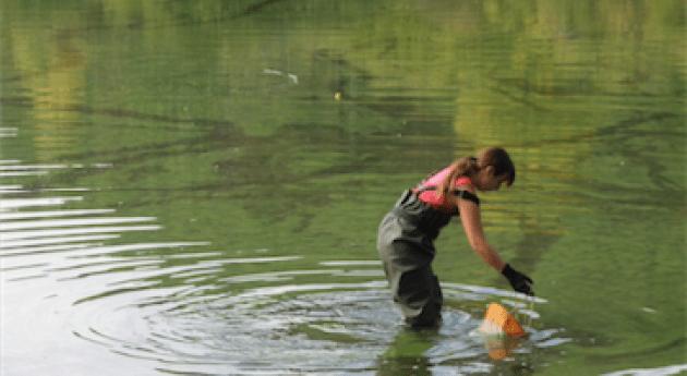 Biodegradación microcistinas mediante bacterias agua dulce