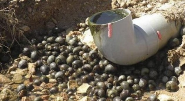 Cataluña reclama al Estado 260.000 euros actuar caracol manzana Ebro