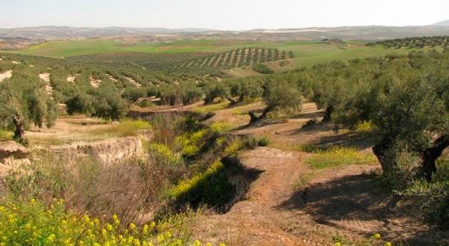 ¿Cómo afectan precipitación y vegetación desaparición suelo mediterráneo?