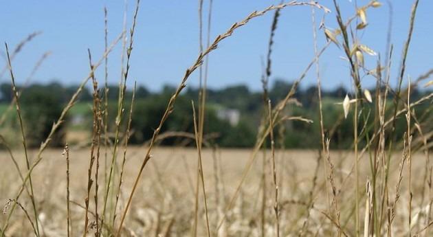 Agricultores y ganaderos piden que se tome serio amenaza sequía