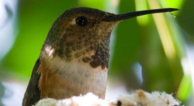 escasez agua y aumento olas calor, devastadores aves desierto