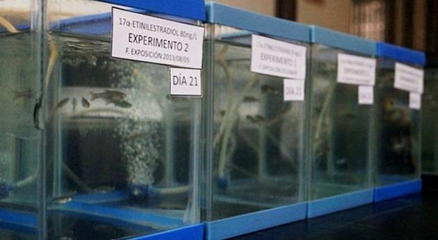 análisis genómico, herramienta caracterizar efectos contaminantes emergentes