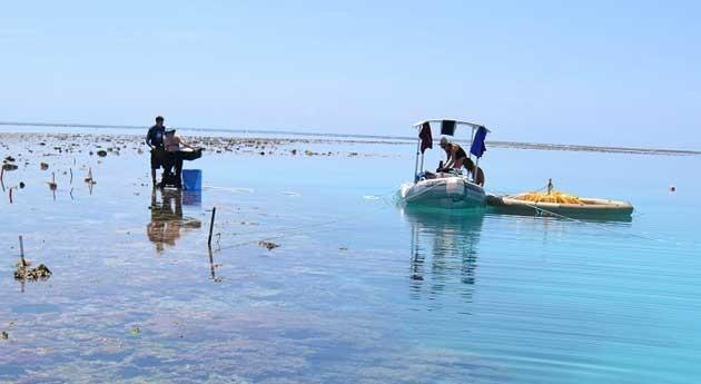acidificación océano ya está haciendo mella arrecifes coral