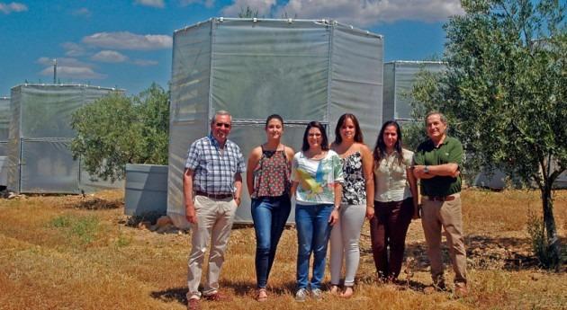 ¿Cómo afecta cambio climático cosecha aceituna?