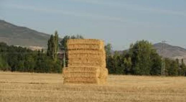 sequía provoca caída 35% cosecha cereal Málaga