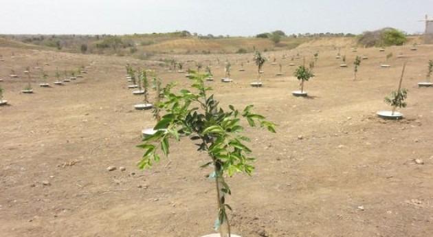 Groasis Technology: Plantar árboles desierto riego artificial