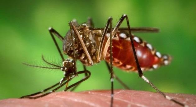 Niño amenaza provocar brote dengue Suroeste Asiático