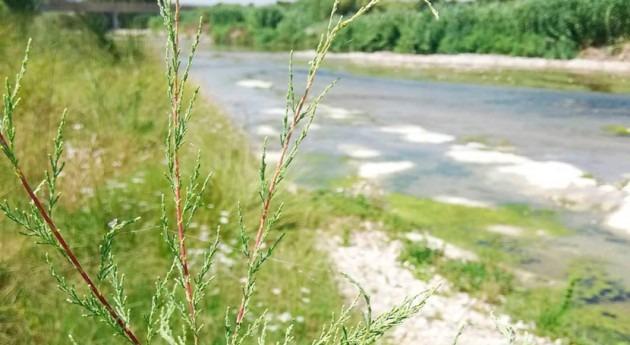 Diputación Valencia inicia campaña estudio estado ríos