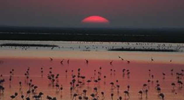 Ecologistas Acción lamenta transformación finca Aznalcázar cultivos arroz
