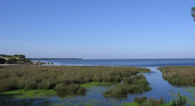 WWF muestra oposición aprobación proyecto Gas Natural Doñana