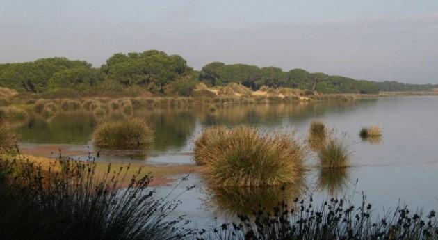 Imagen de Doñana de SEO/BirdLife.