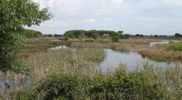 Comienzan obras fase VI proyecto Red Saneamiento Doñana