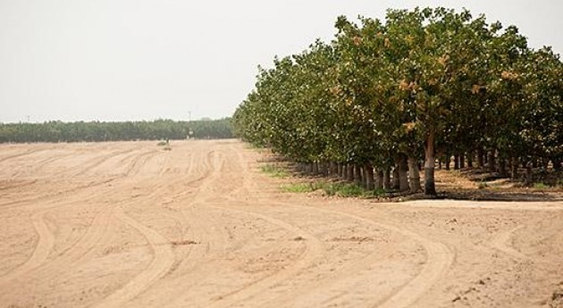 ¿Ha ayudado combatir sequía California uso modelos hidro-económicos?
