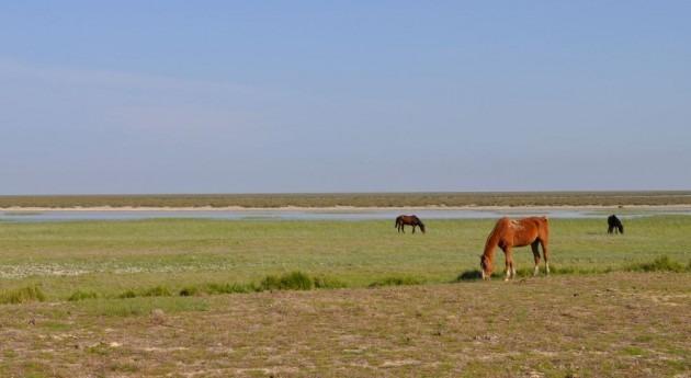 WWF alerta regadíos ilegales entorno Doñana