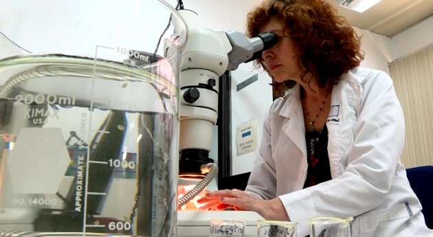 IMTA realiza investigación eco toxicología utilizando Daphnia Magna