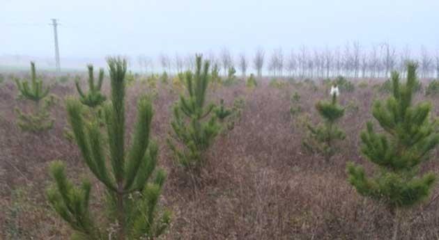 ¿Cómo influye cambio climático bosques región atlántica europea?