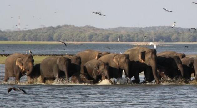 Foto: F.Prieto. Algunos elefantes en Sri Lanka.