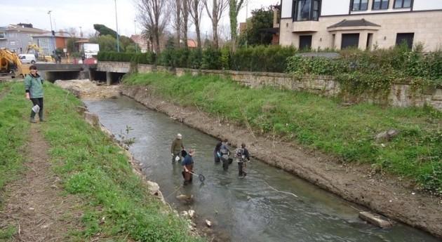 Finaliza traslocación pez espinoso Río Gobela