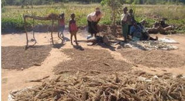 sequía sigue siendo principales motivos inseguridad alimentaria varios países