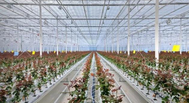 Principios gestión agua riego producción ornamental