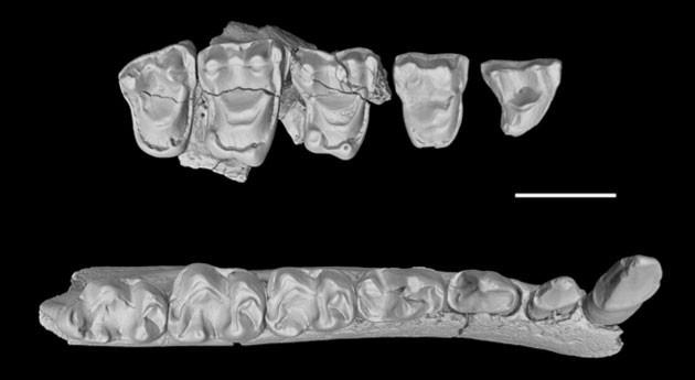 Hallados China fósiles primates estresados antiguo cambio climático