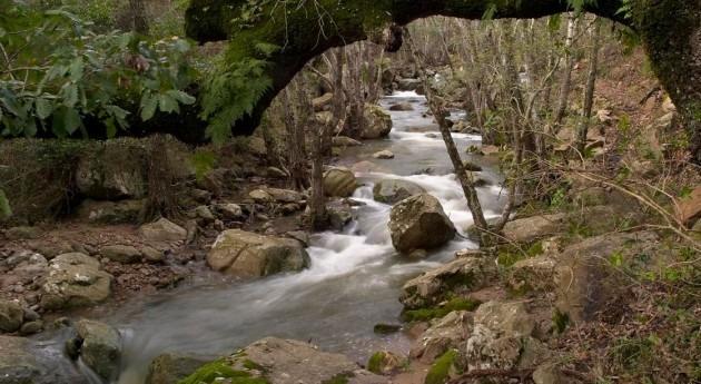 Río Guadalmesí (Wikipedia).