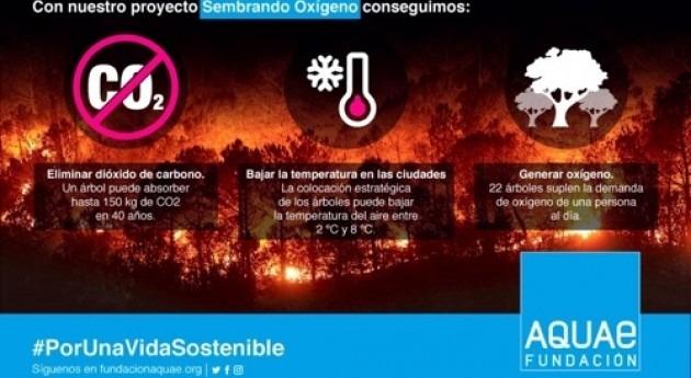 Fundación Aquae planta más 10.000 árboles combatir pérdida masa forestal