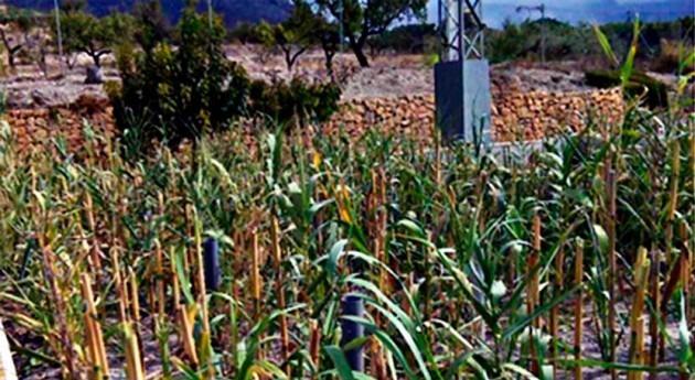 humedales artificiales, potencial tratamiento lodos pequeñas poblaciones