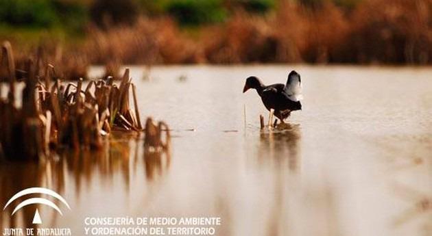 Andalucía celebra Día Mundial Humedales actividades espacios naturales
