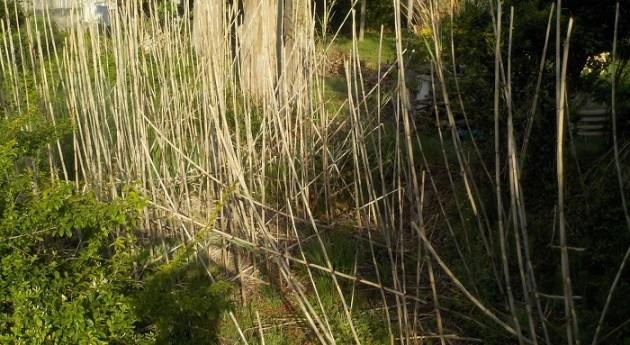 URA retira 1100 m² cañas Arundo donax cuenca arroyo Ondarre Bakio
