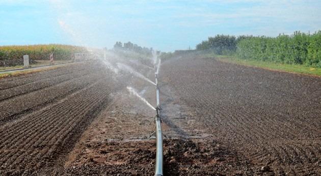 IIAMA analiza presencia Helicobacter aguas reutilizadas riego agrícola