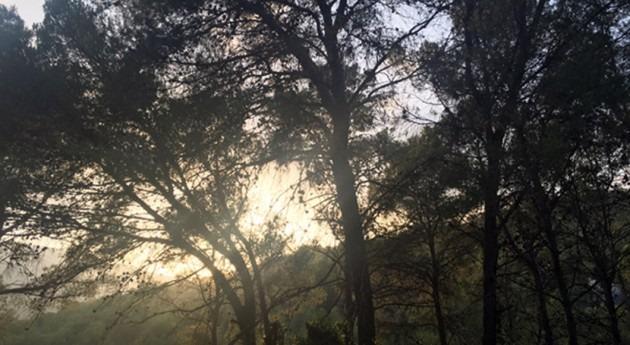 """"""" gestión ecohidrológica mejora adaptación bosques mediterráneos al cambio climático"""""""