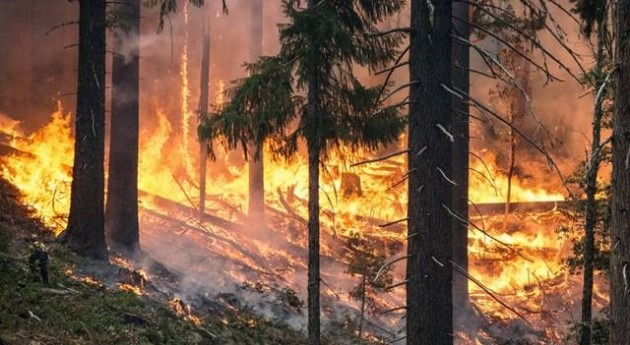 Incendios forestales y afectación aguas