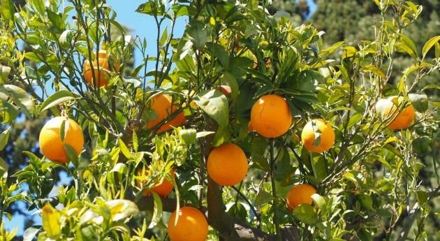 ¿Cuál será impacto cambio climático agricultura regadío sudeste España?