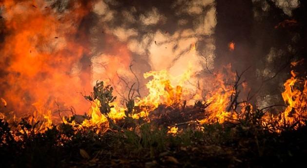 sequía compromete recuperación ecosistema mediterráneo después incendio forestal