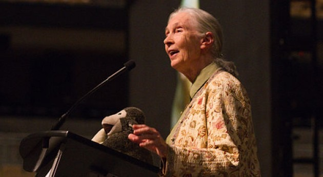 ¿ cuándo premio Nobel Paz Jane Goodall?