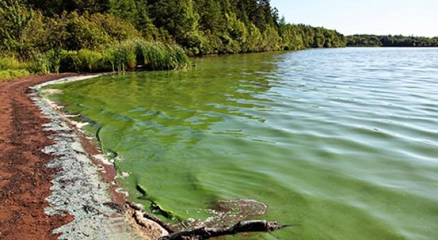 Control algas lagos y reservorios