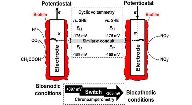 sistemas bioelectroquímicos podrían permitir analizar distintos compuestos biosensor