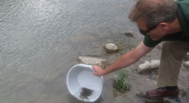 Pablo Munilla suelta alevines en el río Ara.